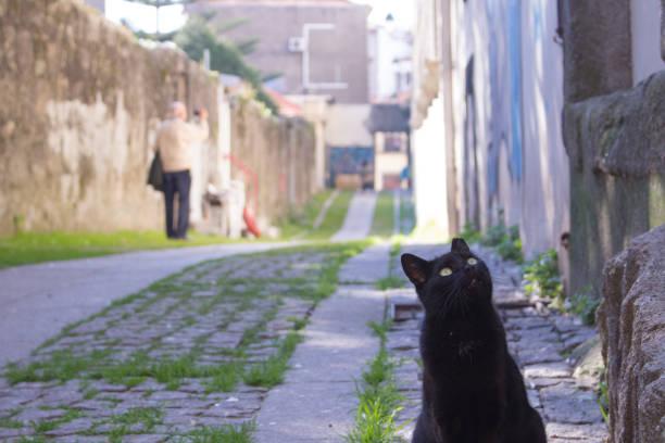 Black cat looking up picture id841506160?b=1&k=6&m=841506160&s=612x612&w=0&h=0rnftroztvyhmxza5dg17t3bcdaatbpoxllgqymfhei=