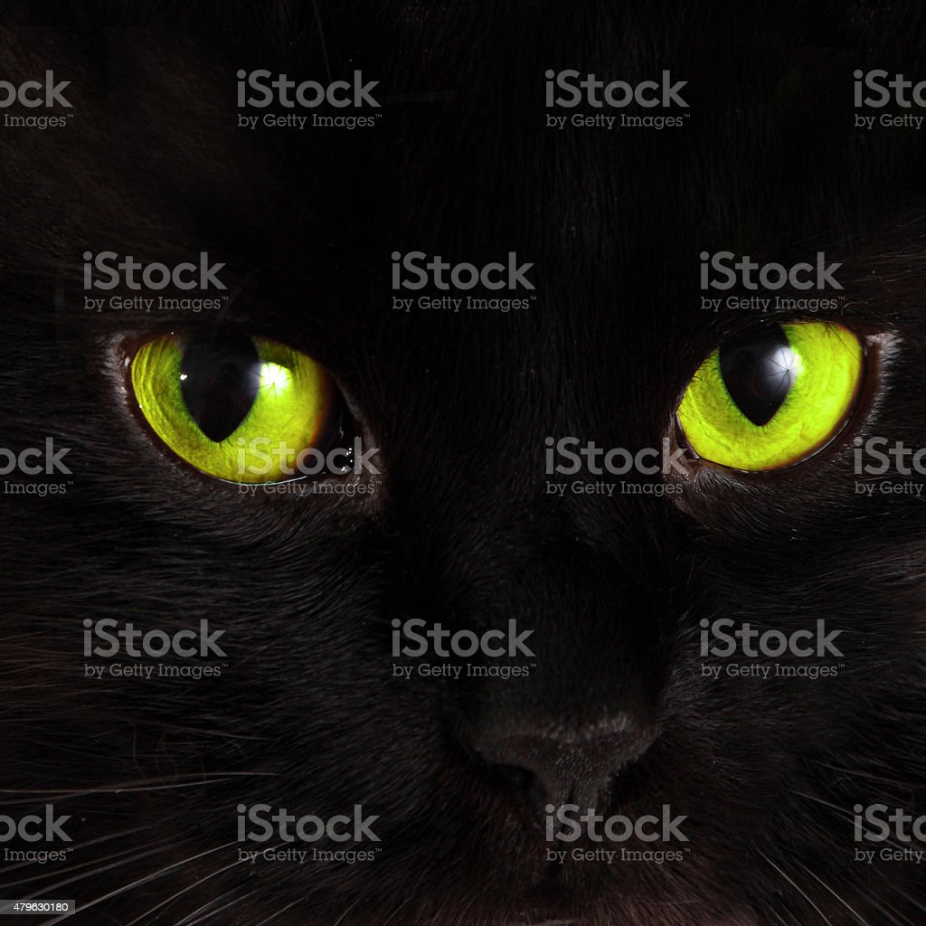 Black cat looks at you with bright green eyes stock photo