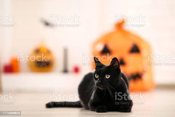 Black cat lying at home picture id1174069825?b=1&k=6&m=1174069825&s=612x612&h=cohacvdgx4i3ymdqbx1g63soew zbye41ig0kfumnwa=