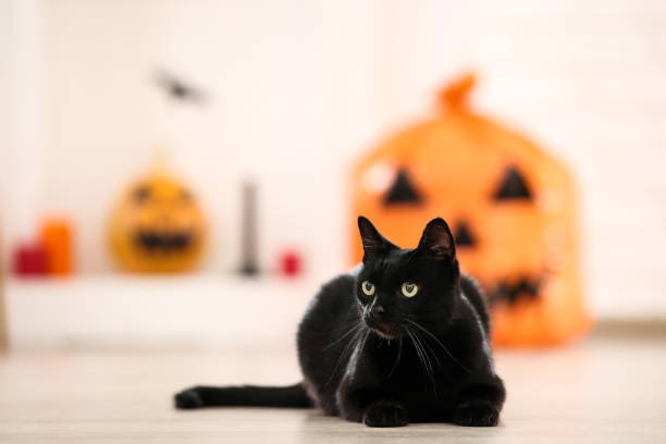 Black cat lying at home Black cat lying at home halloween cat stock pictures, royalty-free photos & images