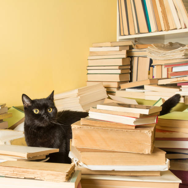 Black cat lying in a pile of books selective focus picture id641892990?b=1&k=6&m=641892990&s=612x612&w=0&h=s4jy92hbylf3cifhf676lelqaxvva0o4ft3e8jswkv0=