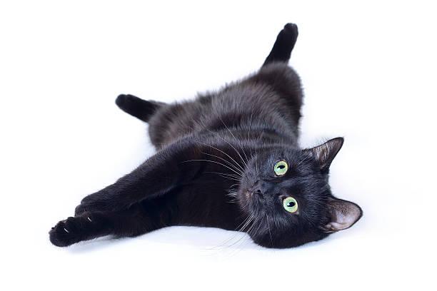 Black cat lying on his back isolated on white background picture id614113782?b=1&k=6&m=614113782&s=612x612&w=0&h=mrsnzoc0emljo8kruaixi9ljellud1q4mymqseasyeu=