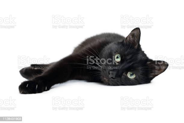 Black cat lying on its side on a white background picture id1128431903?b=1&k=6&m=1128431903&s=612x612&h=hilfs3ioqa i4eyd2qqg9wumz0wah3try6it39oye2k=