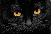 黒猫の銃口