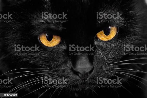 Black cat muzzle picture id1153003055?b=1&k=6&m=1153003055&s=612x612&h= te30cjhauopavcipmxu4b4empnavaarct6saxnem3c=