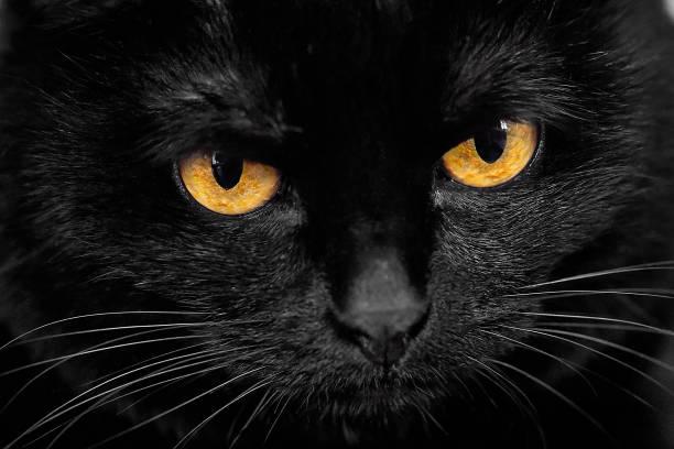 Black cat muzzle picture id1153003055?b=1&k=6&m=1153003055&s=612x612&w=0&h=ghd d1iqrhtqkdff1xx30dfqkw2zbmbf1kjoe6e3lbm=