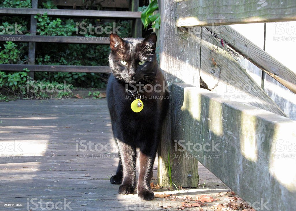 Black Cat Of Filbert Steps foto royalty-free