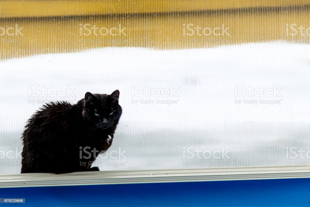 Black cat on a background of white snow and yellow fence. royalty-free stock photo