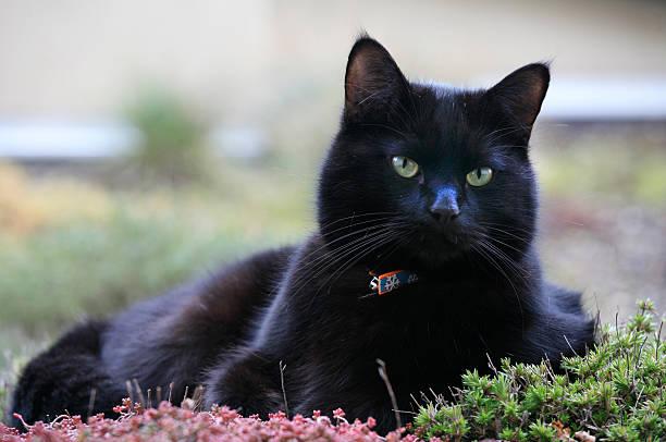 Schwarze Katze auf einem pflanzliche roof garden