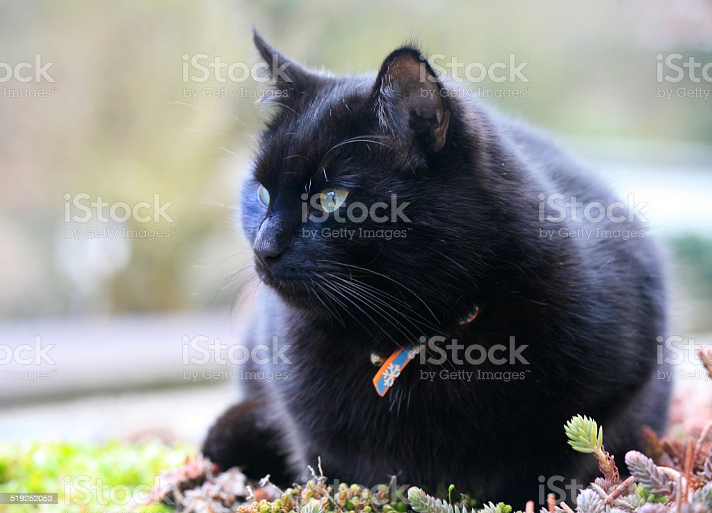 Black cat on a vegetal roof garden stock photo