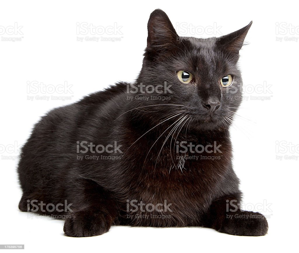 Black cat on  a white backgroound royalty-free stock photo