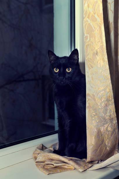 Black cat on a windowsill behind the curtain selective focus picture id1201031210?b=1&k=6&m=1201031210&s=612x612&w=0&h=c6uyndarsrtnfeqe85loacu3k6dfxw0gmwasssivpfa=
