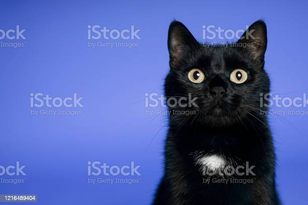 Black cat on blue background friday the 13th picture id1216489404?b=1&k=6&m=1216489404&s=612x612&h=gqdojgswbpwqpbq0uehuy98l2no 63fsbqjztv vcuc=