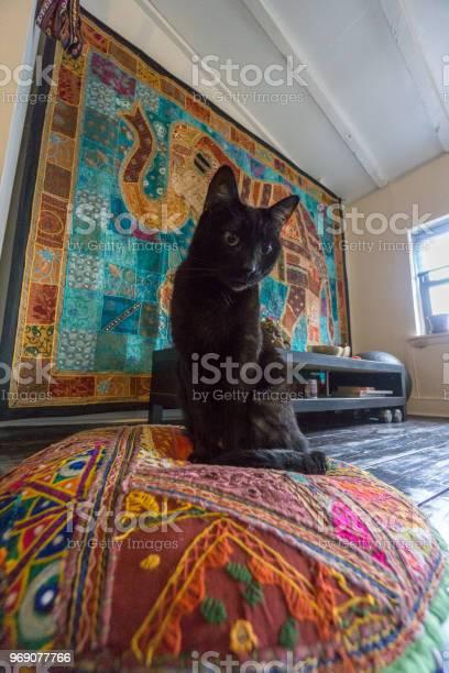 Black cat on cushion picture id969077766?b=1&k=6&m=969077766&s=612x612&h=vuhqzw7rqxoytogtumrmslxahyyiwao8 rdbpqsbpka=