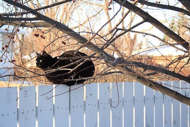 Black cat on fence looking away seen though tree picture id96360468?b=1&k=6&m=96360468&s=612x612&w=0&h=t1pejhfketf2ihl xbi2cm4mye7jxhe0zm8s zumhzi=