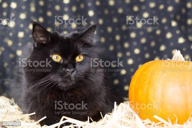 Black cat on halloween picture id822952204?b=1&k=6&m=822952204&s=612x612&h=kq0v5b0n iy 5blnlqp04exvk3xhjzt6vyt6lqebgys=