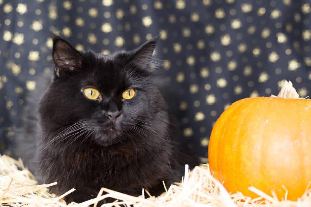 Black cat on halloween picture id822952204?b=1&k=6&m=822952204&s=612x612&w=0&h=yyswfcgqq wtyqyvrjbp6k9stzaxtb gvbljg9kuz u=
