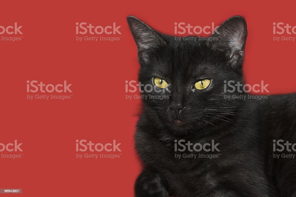 black cat on red background royalty-free stock photo
