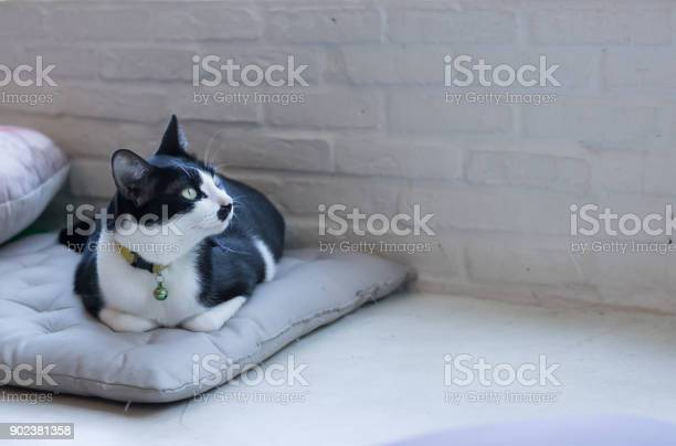 Black cat on the cushions picture id902381358?b=1&k=6&m=902381358&s=612x612&h=wbnji jhtrsh1d s8d1hsascdha8hn ypcyqftgs11u=