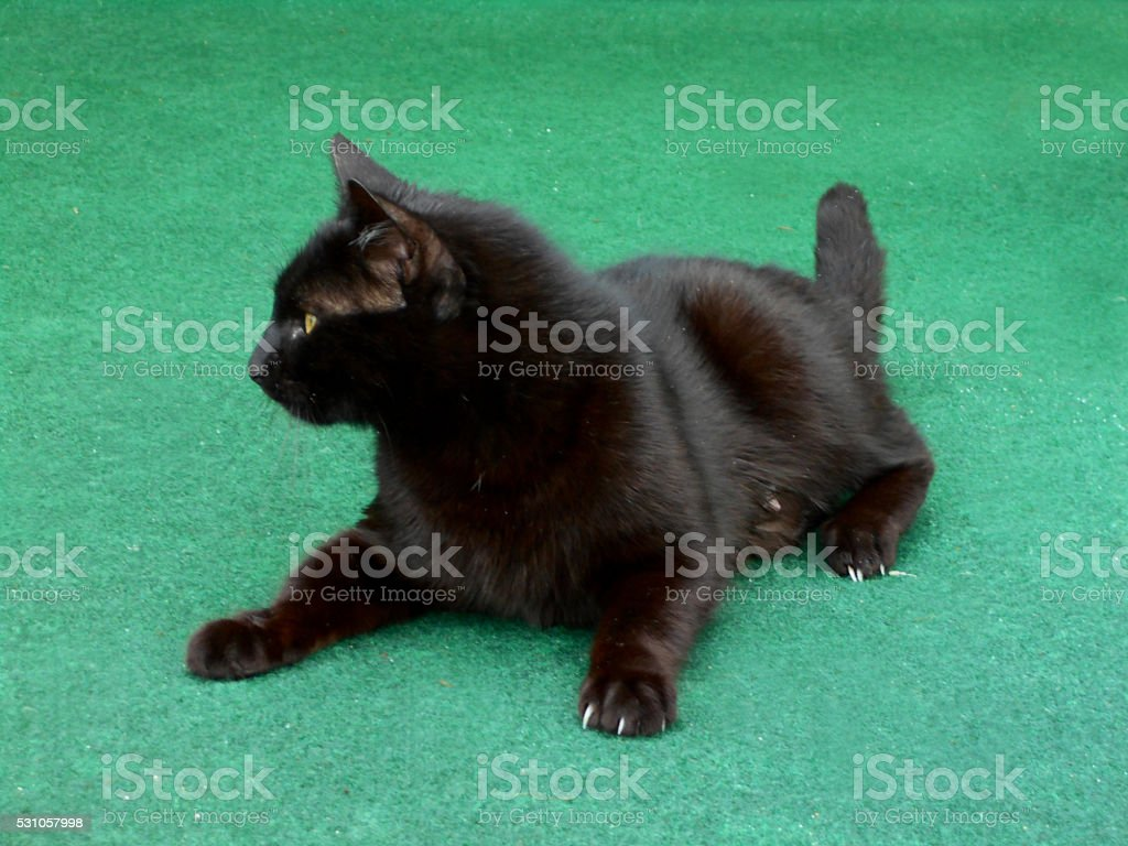 Black cat on the green carpet stock photo