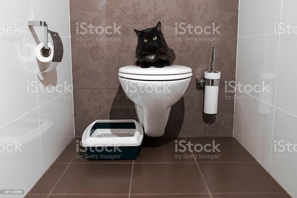 Gato preto no vaso sanitário - foto de acervo
