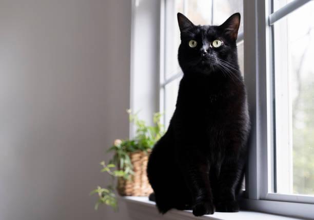 Black Cat on the Window Sill stock photo