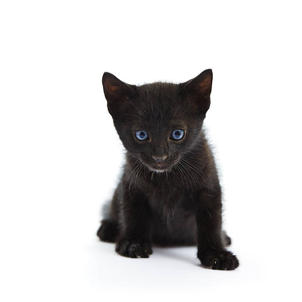 Black cat on white background picture id598079220?b=1&k=6&m=598079220&s=612x612&w=0&h=cvgk4nvfcvfwgfw1 vgckduo19tpdxslfhe14szvjau=