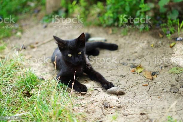 Black cat or kitten just catched small mouse picture id1263136421?b=1&k=6&m=1263136421&s=612x612&h=wb6ix8onsa8it sqplmwrl19ljlgiew2tuwnbdy3 wy=