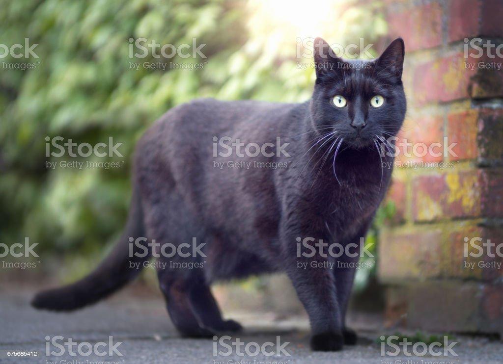 Black cat outdoor close up stock photo