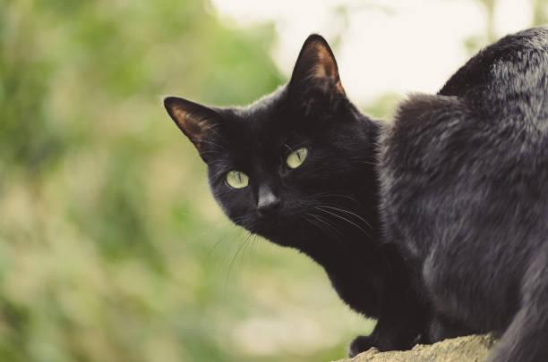 black cat outside stock photo