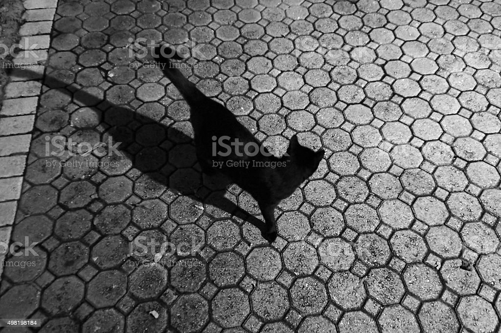 black cat outside with night shadow stock photo