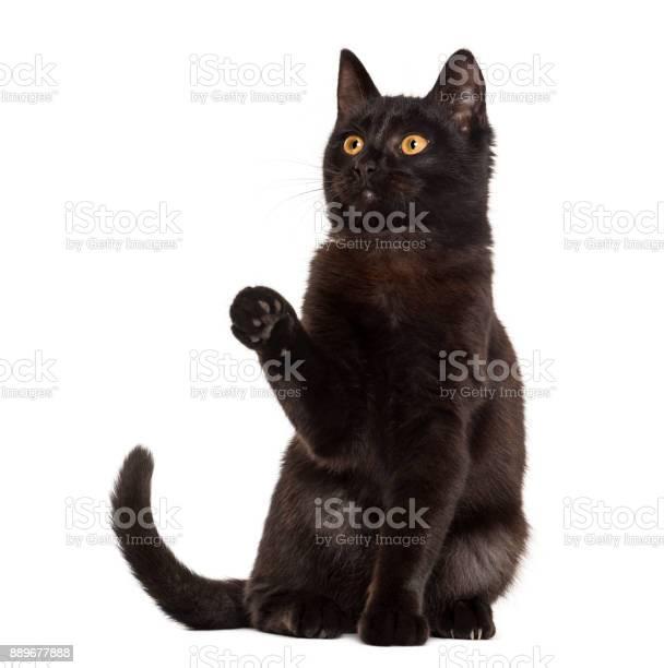 Black cat pawing in front of a white background picture id889677888?b=1&k=6&m=889677888&s=612x612&h=dglytbg32uiasmuylnarkiyvnkfezft9kbhzaiarxp0=