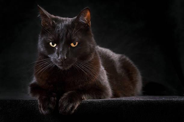 Black cat perched on a raised black surface picture id113513161?b=1&k=6&m=113513161&s=612x612&w=0&h=wgqzstfr27xlvjrvtksawxsnuc3lla4fgcrf0okeuv4=