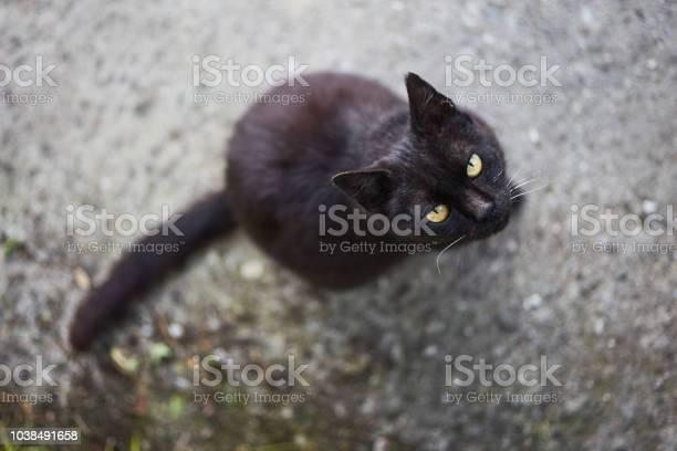 Black cat picture id1038491658?b=1&k=6&m=1038491658&s=612x612&h=nnid55r zxpalfxpa93vm6djomcdly0mhuw66sk v30=