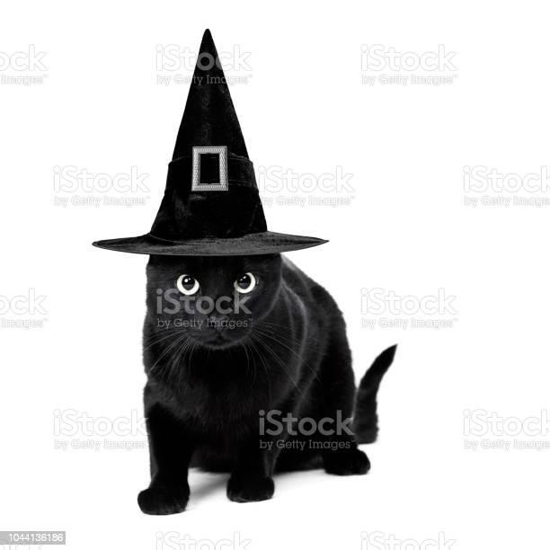 Black cat picture id1044136186?b=1&k=6&m=1044136186&s=612x612&h=06bk8vr03jyhe6temdjus9xniuhtxft8o7wdjggza2y=