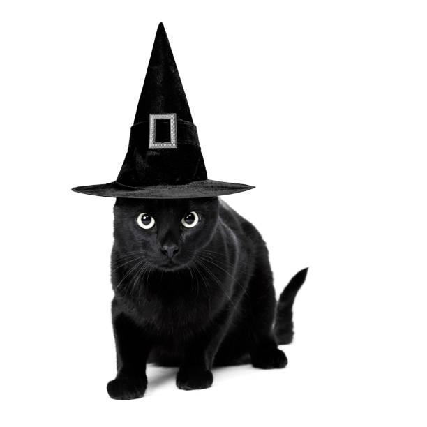 Black cat picture id1044136186?b=1&k=6&m=1044136186&s=612x612&w=0&h=cpjjunb1u7rokycngg5z9b xkjdmlpnjiyvdazkz3lu=