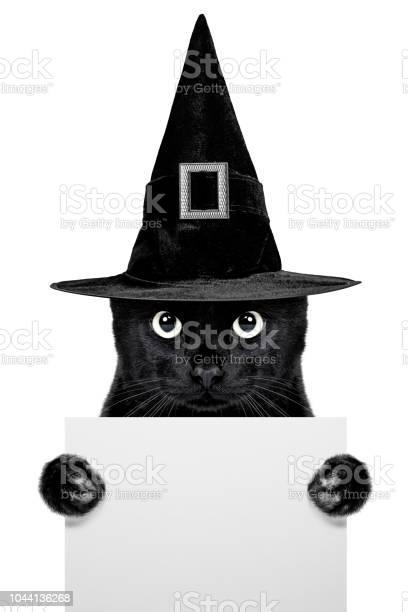 Black cat picture id1044136268?b=1&k=6&m=1044136268&s=612x612&h=ho0sxeipugr26jroi4ukfvyccmttogcwx5jxjlsb3f4=