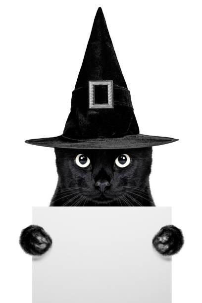 Black cat picture id1044136268?b=1&k=6&m=1044136268&s=612x612&w=0&h=0v txdmt8 hwa2 0nse2bjvj00ujop k3sbblpgy1bk=