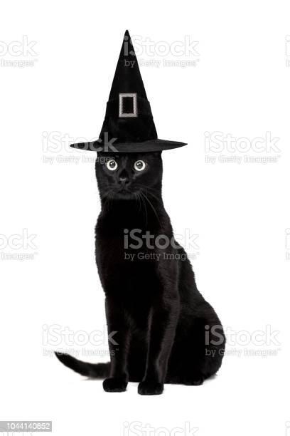 Black cat picture id1044140852?b=1&k=6&m=1044140852&s=612x612&h=flxrtex8ujw7qvhrasyqp0 ukjd brk td fj9l9rou=
