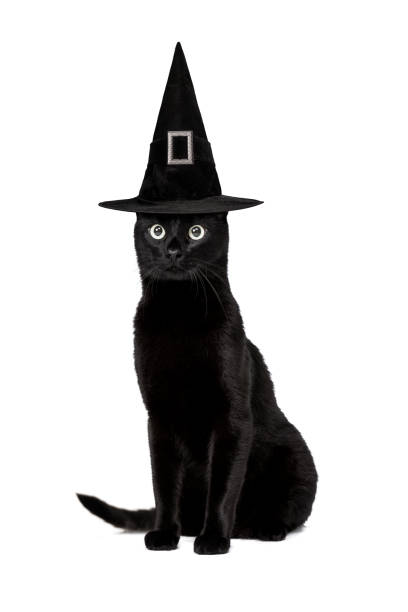 Black cat picture id1044140852?b=1&k=6&m=1044140852&s=612x612&w=0&h=pesj8ygchnfiayzj8pf cbcw ol10bacvqsjolgsale=