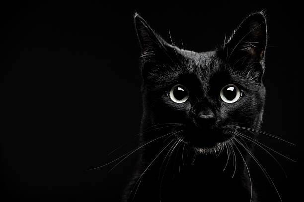 Black cat picture id105705851?b=1&k=6&m=105705851&s=612x612&w=0&h=y2ehph2zjfyyjzbaen5vckkl7v0yxzbejklu  qu7x4=