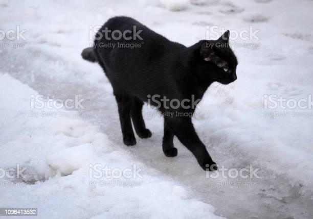 Black cat picture id1098413532?b=1&k=6&m=1098413532&s=612x612&h=l8jiergx8ofz8exuxj23ikphstxpkgk tor2mw4ulps=