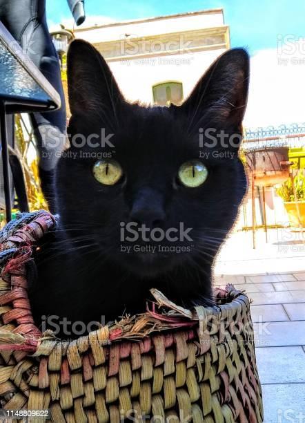 Black cat picture id1148809622?b=1&k=6&m=1148809622&s=612x612&h=y87vno l9rts6wwosj8 hchh7ovhxn5iwv hpfhiohk=