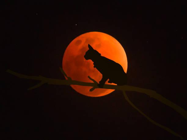Black cat picture id1190602137?b=1&k=6&m=1190602137&s=612x612&w=0&h=puy pqptifcb932 rrv8ljy6c5vlk02wplhis8js6u8=