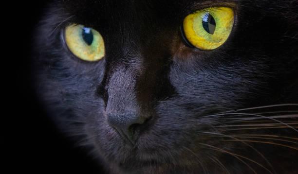 Black cat picture id1208060362?b=1&k=6&m=1208060362&s=612x612&w=0&h=ztputpnvnrsumtp 8bopmwunnnuucpaadhs6nmv6xle=