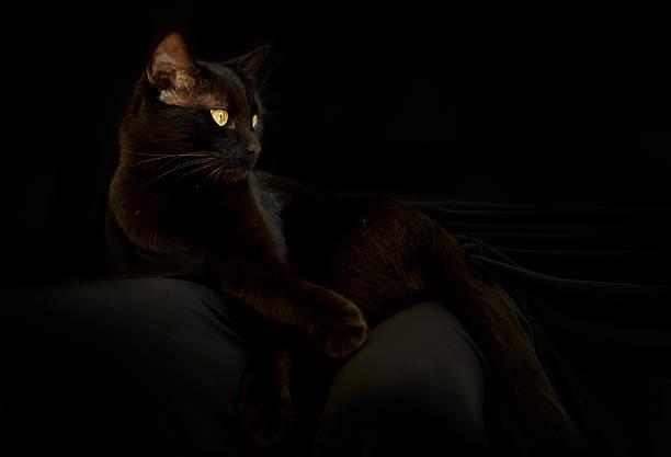 Black cat picture id138036334?b=1&k=6&m=138036334&s=612x612&w=0&h=fq2ney25rwfuz399bczj1plnj4idf8hrq89agkg 0qg=