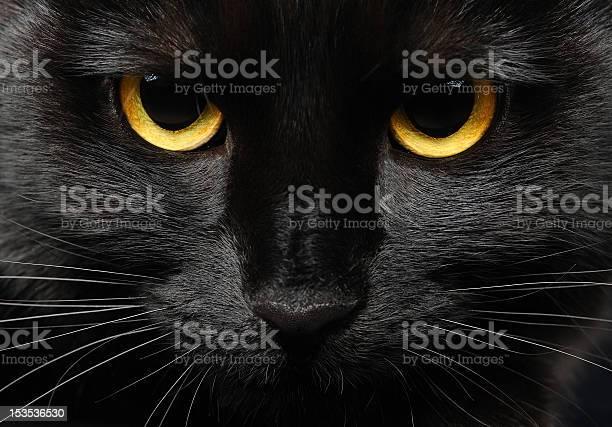 Black cat picture id153536530?b=1&k=6&m=153536530&s=612x612&h=vjbzcvg v4oclosilfsiypzu zth 2qobtvqk 4milg=