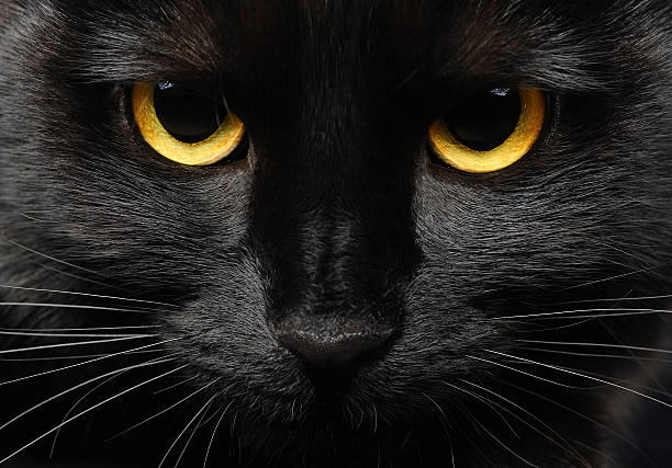 Black cat picture id153536530?b=1&k=6&m=153536530&s=612x612&w=0&h=ihykvvikkdbb 5rlgahuktgtm7izhalvvdwoewd3hmk=