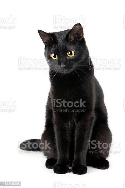 Black cat picture id165206096?b=1&k=6&m=165206096&s=612x612&h=hbul7ebyzlv1r8ixnwvsethpepxwzcn4wrfbwqkrxf0=