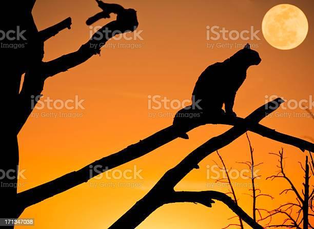 Black cat picture id171347038?b=1&k=6&m=171347038&s=612x612&h=edkyx xg6hel7utqpp6hpgwk zkktqtflxwhdc7muhm=